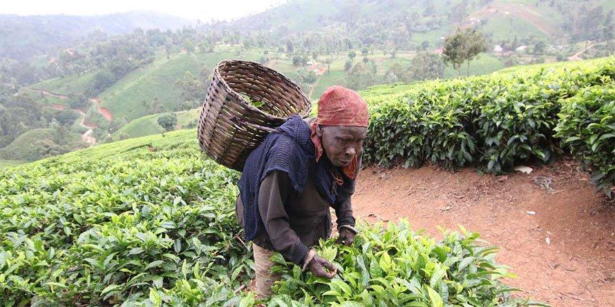 Kenya has made penetration of value-added farm produce such as tea,