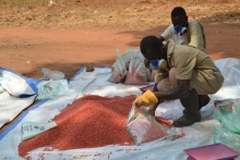 © Former rebel fighters from South Sudan's civil war, manually packing improved sorghum seed in Yambio, South Sudan. over 1,900 ex-fighters have been taken through rehabilitation programmes, and have been released to join vocational training and engage in agribusiness, with others being integrated into organised forces.