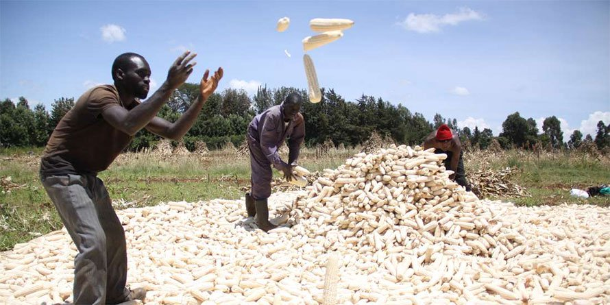 Kenya is looking to have enough food for all in the next five