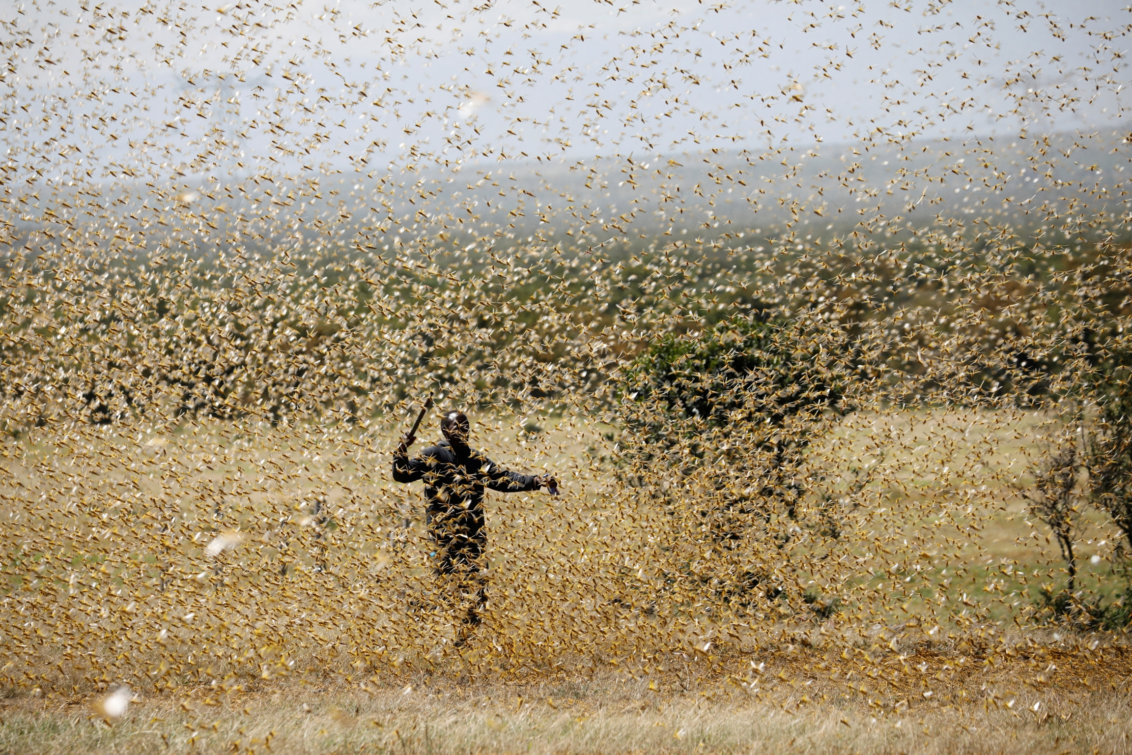 A man attempts to fend-off a swarm of desertlocustsat a ranch near the town of Nanyuki in Laikipia county,Kenya, Feb. 21, 2020.