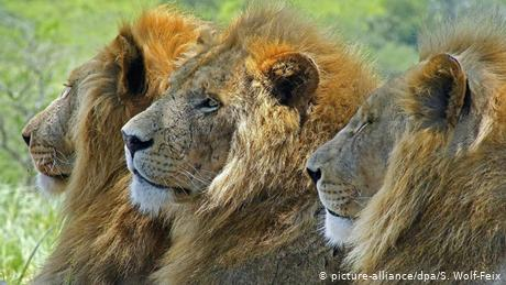Afrikas Nationalparks (picture-alliance/dpa/S. Wolf-Feix)